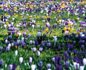 Die Frühlingsausgabe istda!