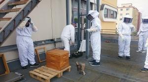 Imker auf dem Schuldach. Foto: ERO/Bienen-AG