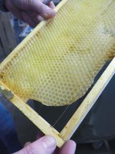 Ein Rahmen mit Bienenwaben. Foto: Beate Heyne