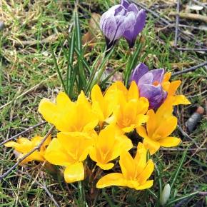 Vier Tipps für den Frühling imKiez