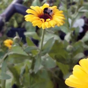 Freude an Blüten undBienen